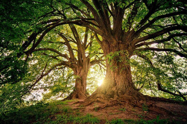 tree, nature, wood